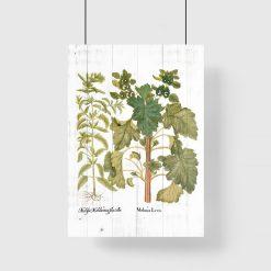 Plakat edukacyjny z ziołami