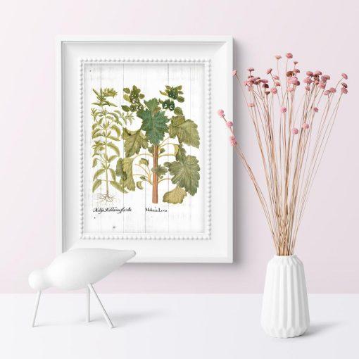 Plakat edukacyjny z ziołami na tle desek