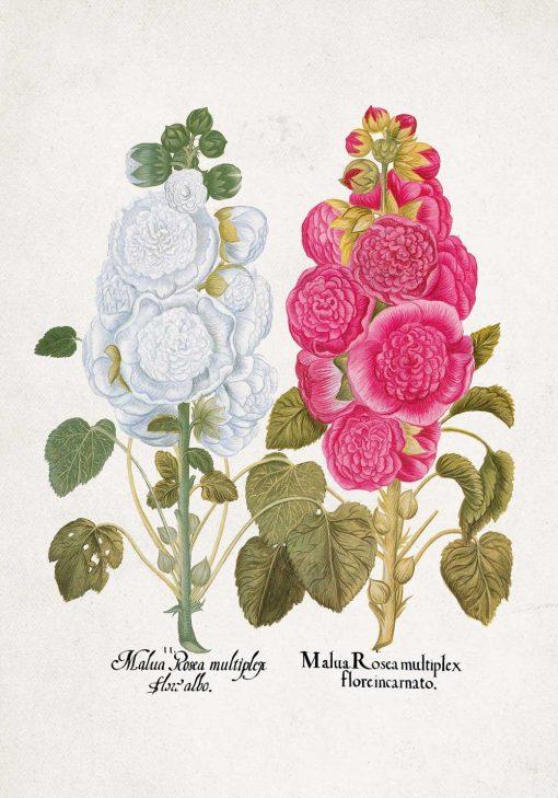 Plakat malwa różowa i biała do dekoracji szkoły