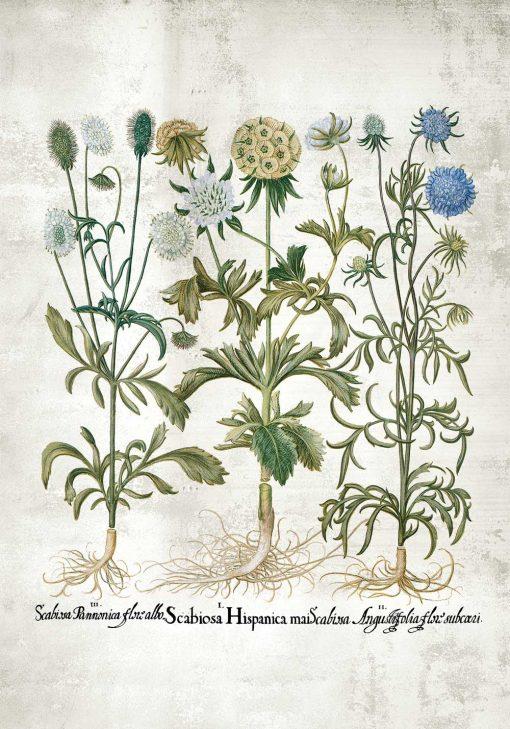 Plakat rośliny dekoracyjne w stonowanych kolorach