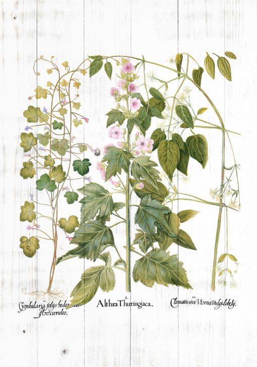 Plakat rośliny zielne i ozdobne na tle desek