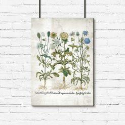 Plakat rustykalny z kwiatami ogrodowymi i łacińskimi nazwami