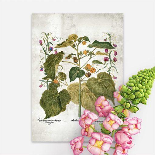 Plakat rustykalny z zaślazem i innymi roślinami