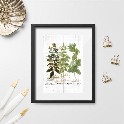 Plakat w stylu rustykalnym z ziołami i łacińskimi nazwami