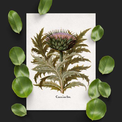 Plakat z karczochem i jego liśćmi