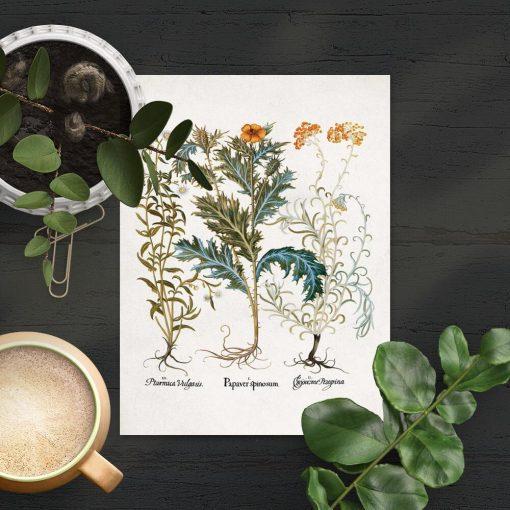 Plakat z krwawnikiem i innymi roślinami
