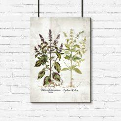Plakat z kwiatami bazylii do ozdoby apteki