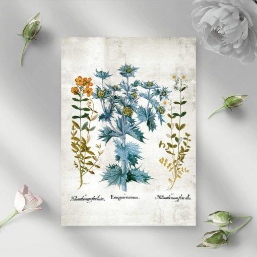 Plakat z kwiatami i liśćmi roślin dekoracyjnych