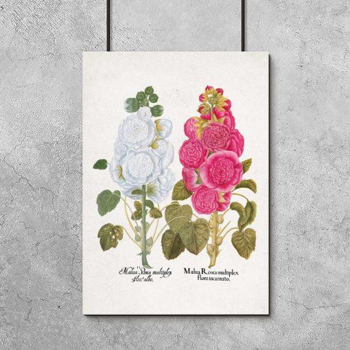 Plakat z kwiatami i nazwami łacińskimi