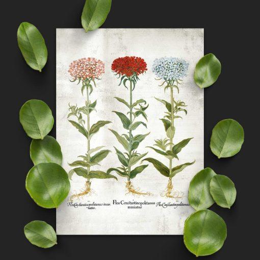 Plakat z kwiatami ogrodowymi i łacińskimi nazwami