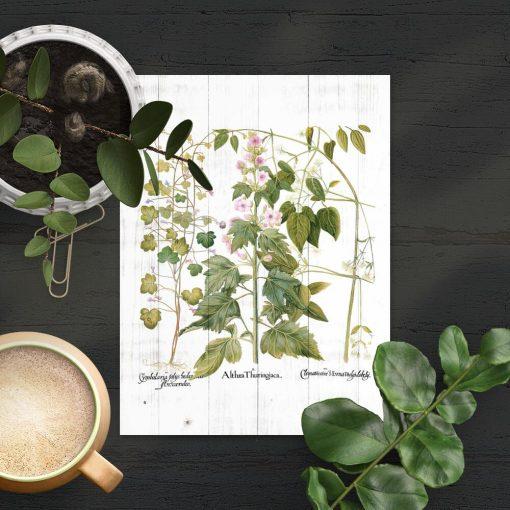 Plakat z motywem botanicznym na tle desek