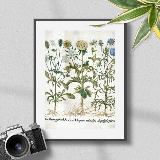 Plakat z motywem roślin kwitnących i łacińskich nazw