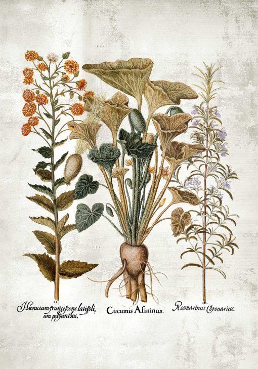 Plakat z motywem roślinnym w stylu rustykalnym
