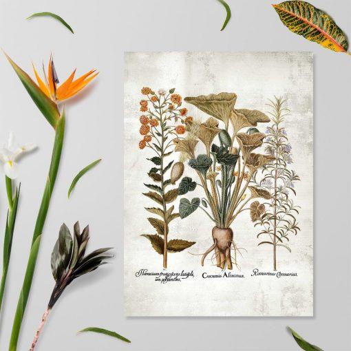 Plakat z ogórkiem i ziołami