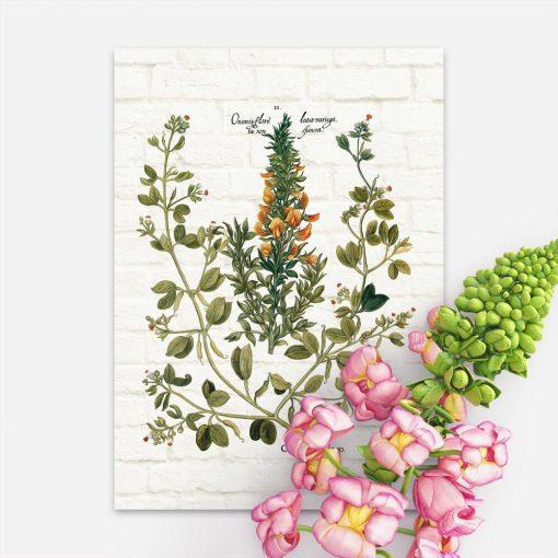 Plakat z rośliną śródziemnomorską na tle cegieł