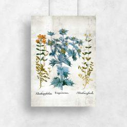 Plakat z roślinami i ich kwiatkami