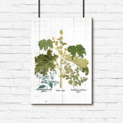 Plakat z roślinami liściastymi na tle bielonych desek