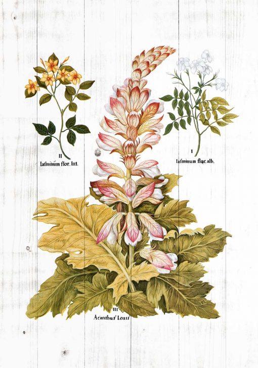 Plakat z roślinami ozdobnymi do powieszenia w szkole