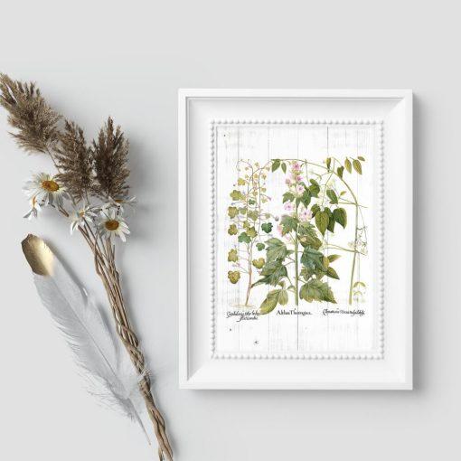 Plakat z roślinami ozdobnymi na tle desek