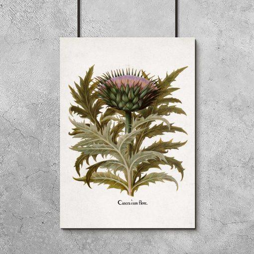 Plakat z warzywem: kwiat iliście