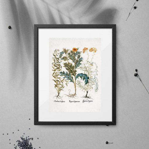 Plakat z wrotyczem i innymi roślinami