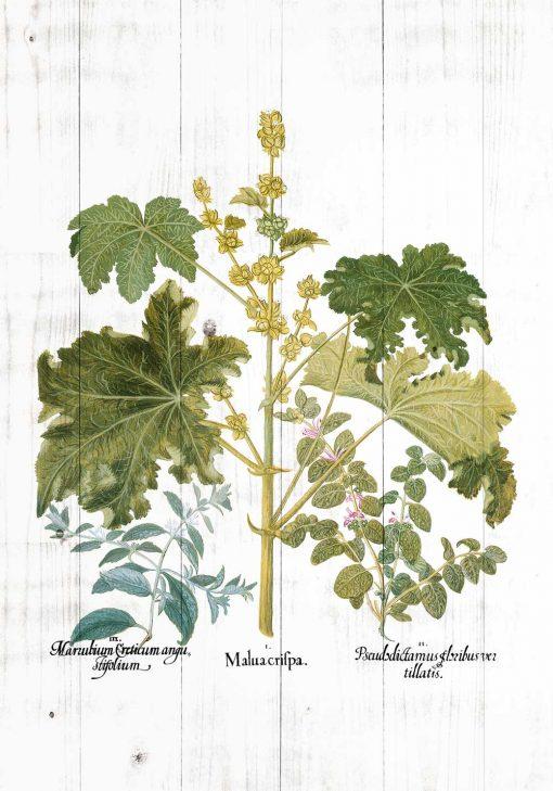 Plakat z zielonymi roślinami na tle bielonych desek