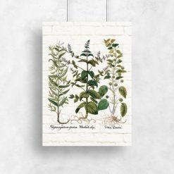 Plakat z ziołami do powieszenia w świetlicy