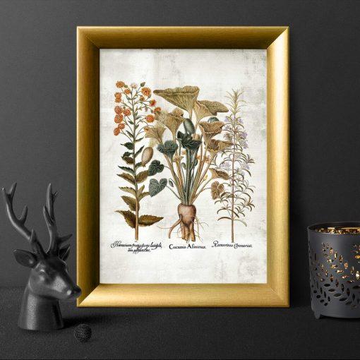 Plakat z ziołami i ogórkiem