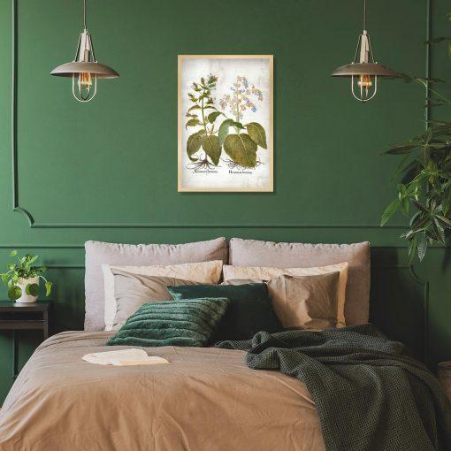 Plakat zielarski - Szałwia powabna do sypialni