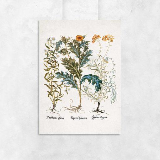 Plakaty z roślinami łąkowymi